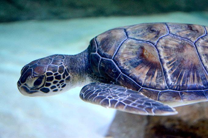 Dubaj Underwater Zoo