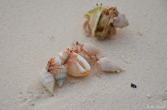Malediwy wakacje Hanimaadhoo kraby