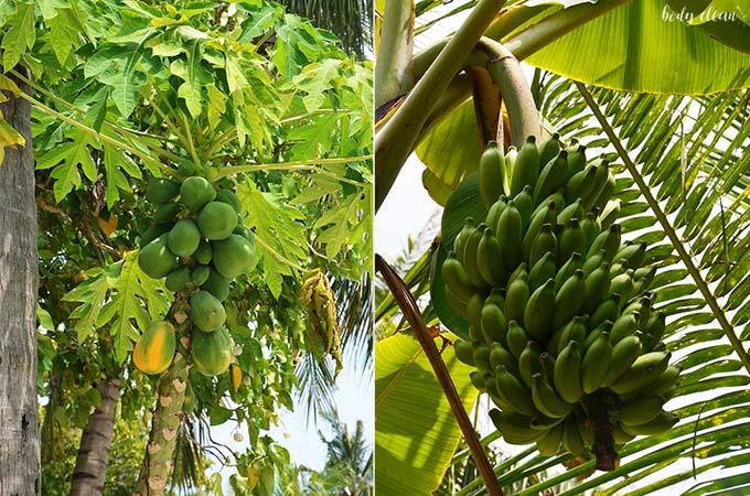 Malediwy wakacje Hanimaadhoo owoce