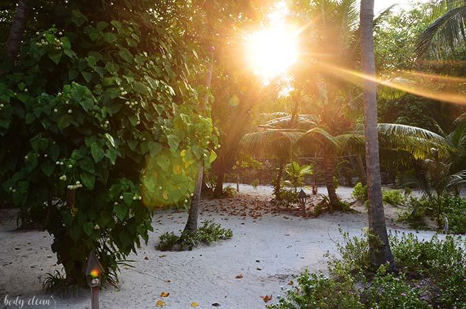 Malediwy wakacje Hanimaadhoo roslinnosc