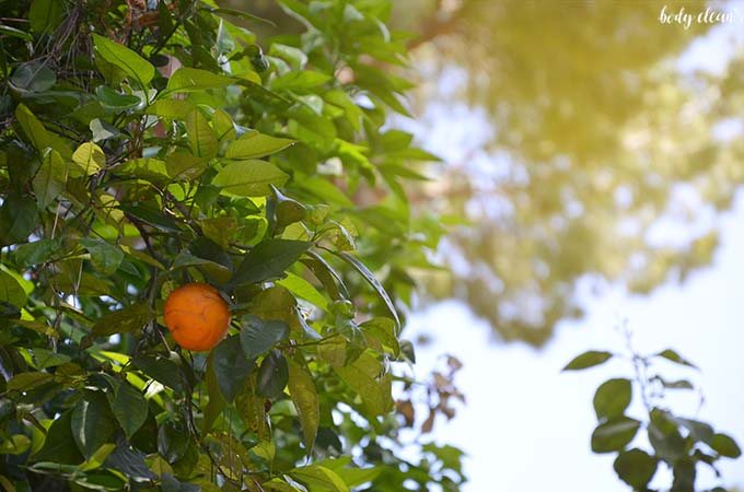 Rzym Giardino degli Aranci ogród pomarańczy