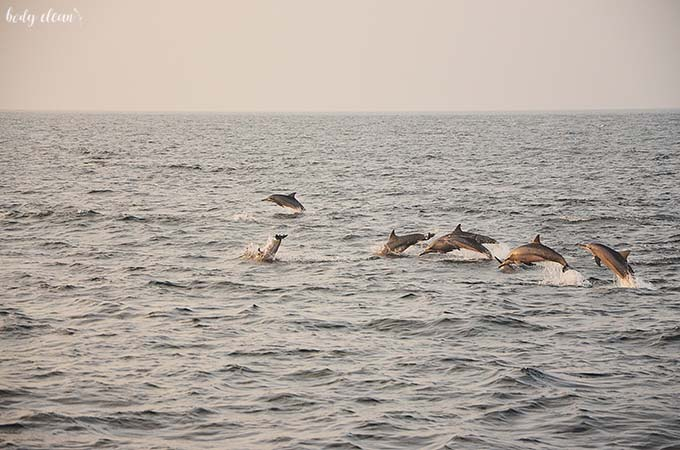 Malediwy delfiny