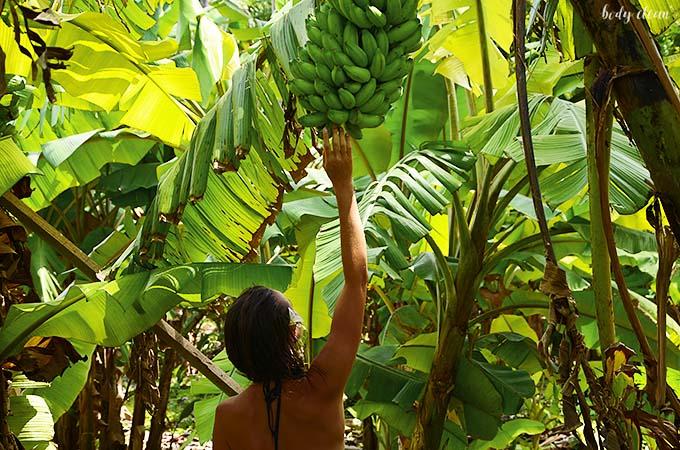 Malediwy roślinność