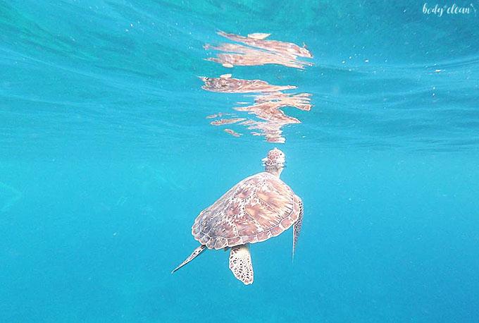 Malediwy żółwie