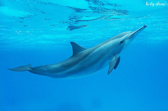 egipt marsa alam delfiny satyaya